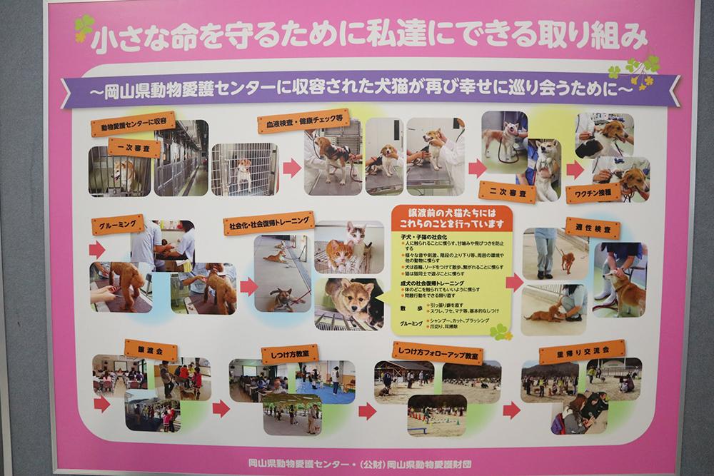 カフェ有鄰庵、公益財団法人岡山県動物愛護財団への見学