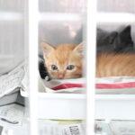 カフェ有鄰庵、公益財団法人岡山県動物愛護財団への寄付額のご報告