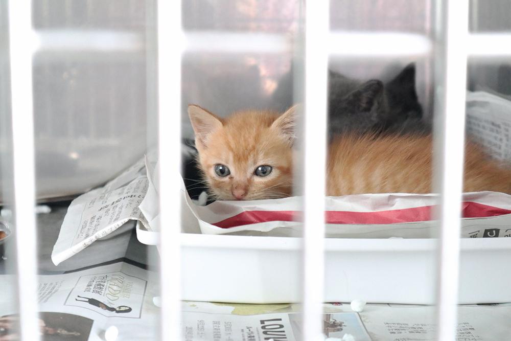 公益財団法人岡山県動物愛護財団さんの捨て猫
